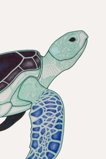 Joseph Gatell - Menagerie: Revisited Exhibition 'Turtle'